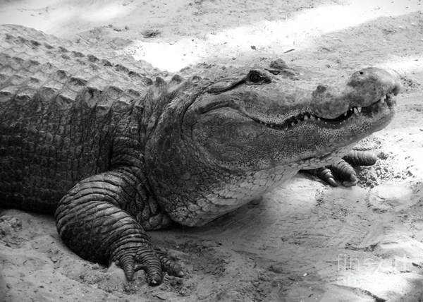 Photograph - Charming Gator Black And White by Carol Groenen