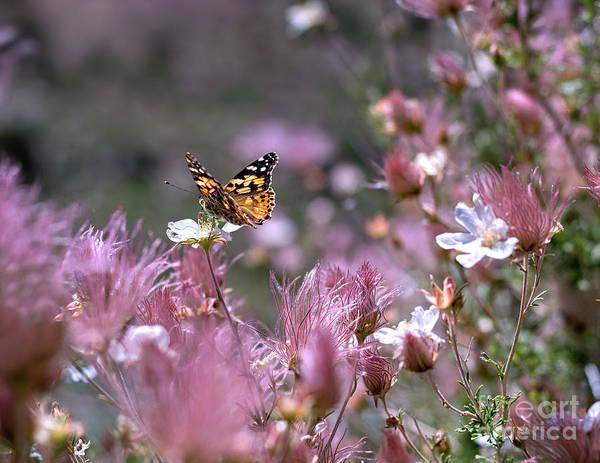 Photograph - Chasing Butterflies by Susan Warren