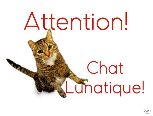 Photograph - Chat Lunatique Number 2 by Endre Balogh