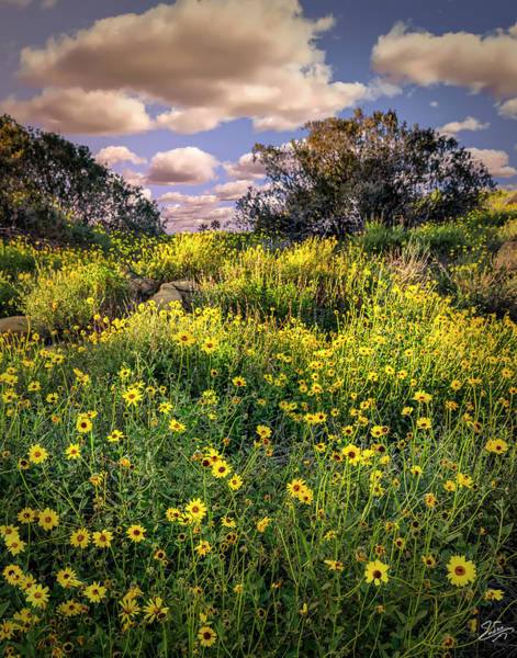 Wall Art - Photograph - Chatsworth Wildflower Bloom by Endre Balogh