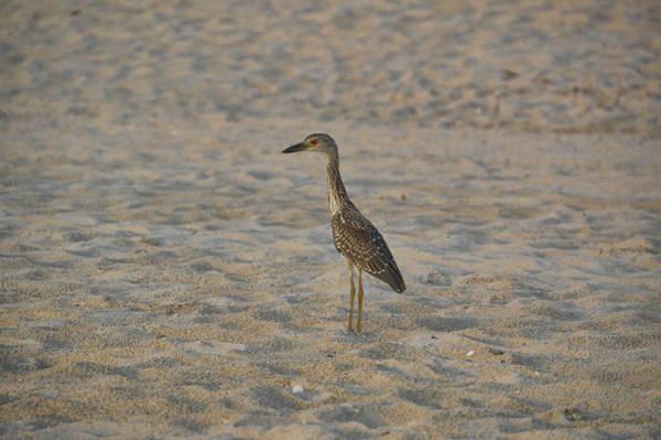 Photograph - Cheeky Bird by Jamart Photography