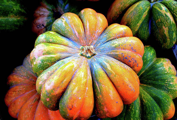 Acorn Squash Photograph - Cheese Pumpkin by Cynthia Guinn
