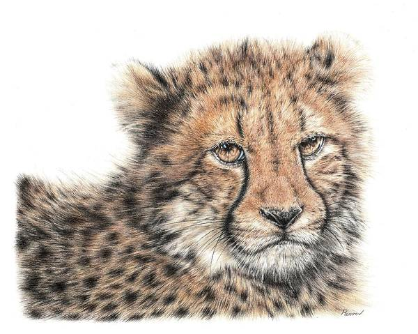 Drawing - Cheetah Cub by Remrov
