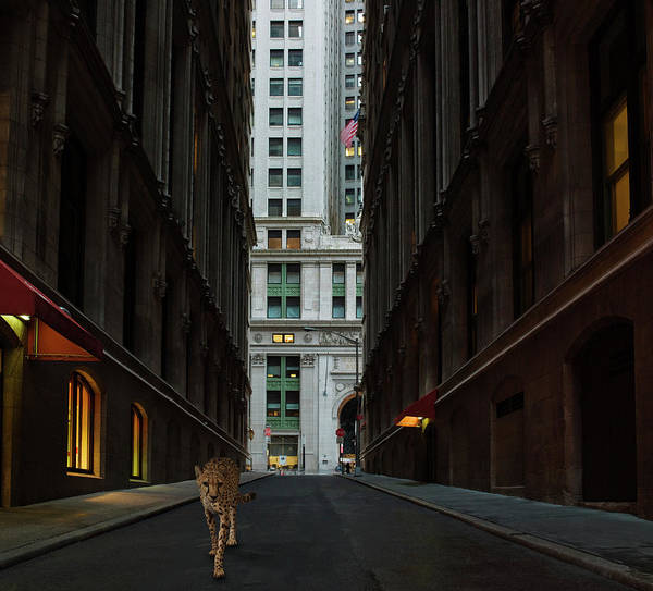 Out Of Context Photograph - Cheetah Walking Along Street by Erik Snyder