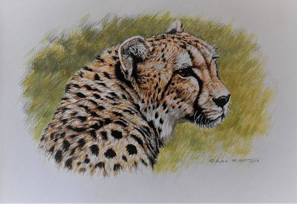 Painting - Cheetah Watercolour Portrait by Alan M Hunt
