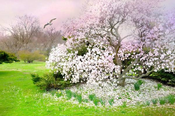 Wall Art - Photograph - Cherry At Bruce Park by Diana Angstadt
