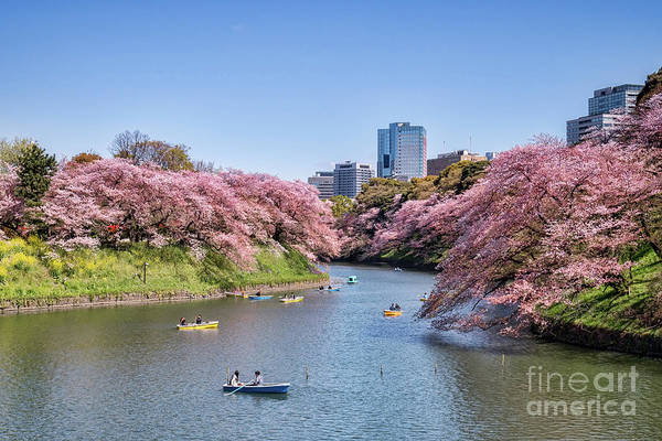 Moat Photograph - Cherry Blossom And Boats, Tokyo by Colin and Linda McKie
