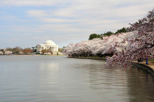 Tidal Basin Photograph - Cherry Blossom At Dc by Tongshan