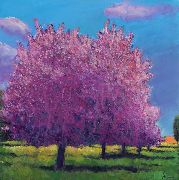 Wall Art - Painting - Cherry Blossom Day by Johnathan Harris