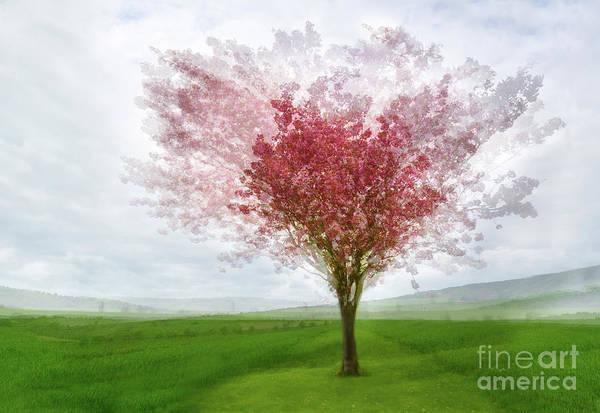 Wall Art - Photograph - Cherry Blossom by Janet Burdon