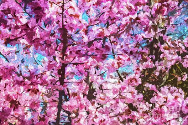 Photograph - Cherry Blossom by Nigel Dudson