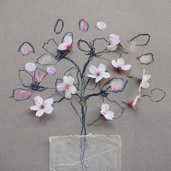 Charcoal Drawing Photograph - Cherry Blossom On Blossom Drawing by Fiona Crawford Watson