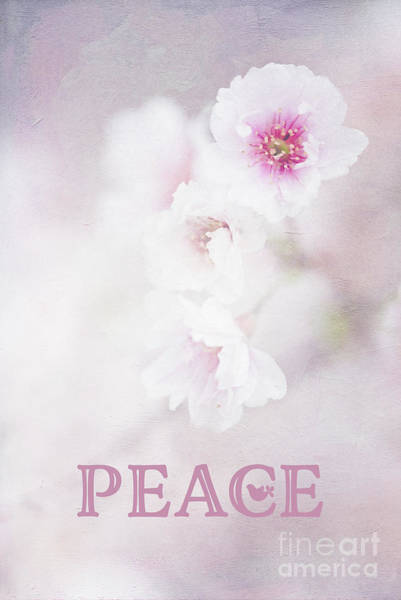 Photograph - Cherry Blossom Peace Art by Anita Pollak