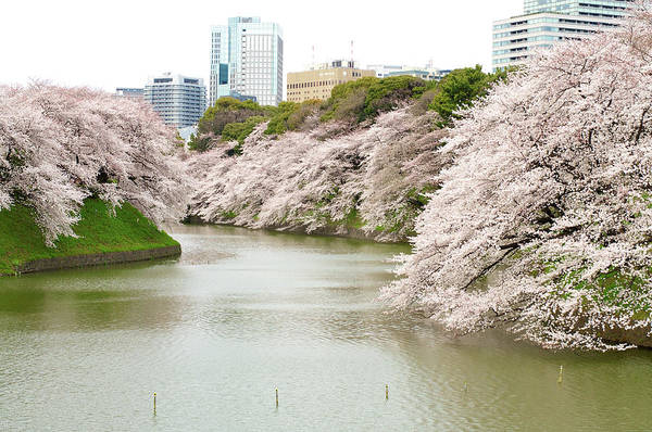 Japan Photograph - Cherry Blossom Sightseeing Along River by Japan From My Eye