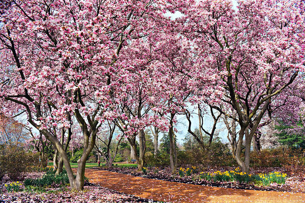 Photograph - Cherry Blossom Special by Marty Koch