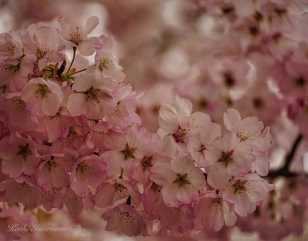 Wall Art - Photograph - Cherry Blossoms 2019a by Kathi Isserman