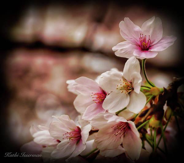 Macro Wall Art - Photograph - Cherry Blossoms 2019f by Kathi Isserman