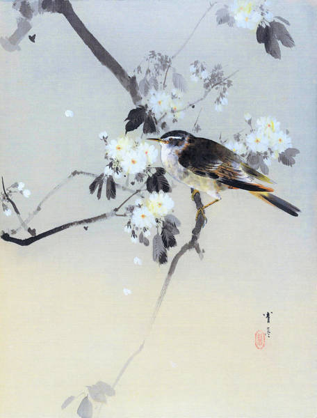 Tits Painting - Cherry Blossoms And Bird - Digital Remastered Edition by Watanabe Seitei