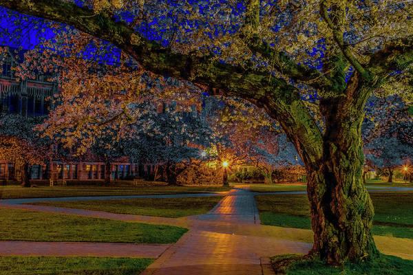 University Of Washington Wall Art - Photograph - Cherry Blossoms At Dawn by Emerita Wheeling