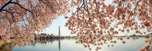 Tidal Basin Photograph - Cherry Blossoms Frame The Washington by Ogphoto
