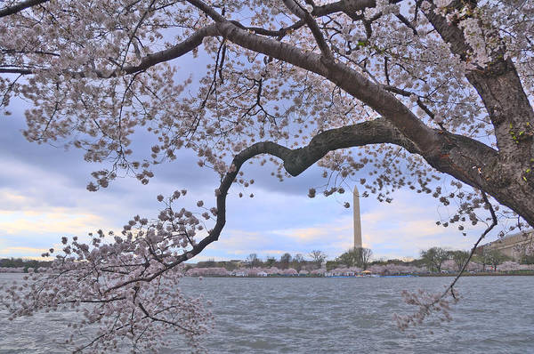 Tidal Basin Photograph - Cherry Blossoms Hdr by Matthew T. Carroll