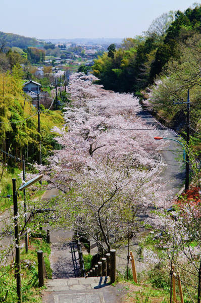 Atsugi Photograph - Cherry Blossoms In Mountain Village by Glittering Star. A Whisper Of Trees. The Noise Of The Town.