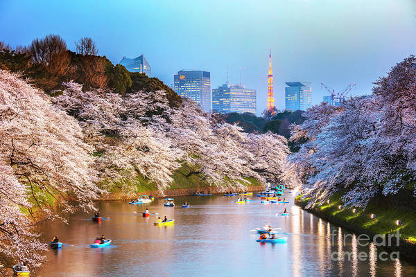 Wall Art - Photograph - Cherry Blossoms In Tokyo At Sunset by Matteo Colombo