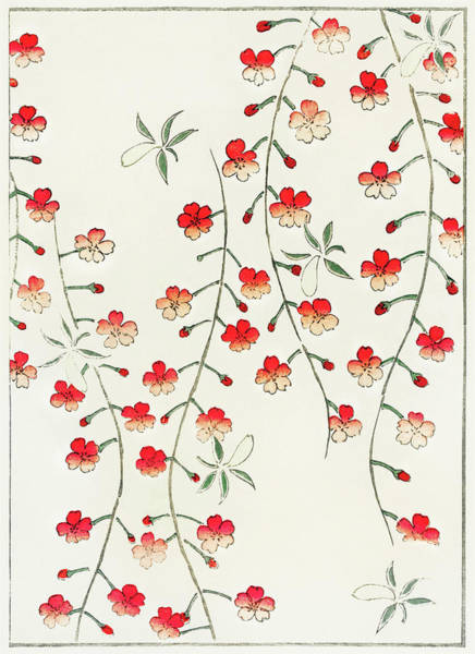 Wall Art - Painting - Cherry Blossoms - Japanese Traditional Pattern Design by Watanabe Seitei