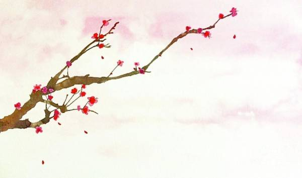 Fife Painting - Cherry Blossoms by Marisa Fife
