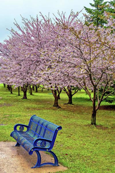Wall Art - Photograph - Cherry Blossoms by Steve Harrington
