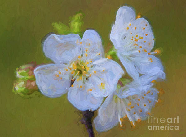 Wall Art - Digital Art - Cherry Buds And Blossoms 4510fstcti by Doug Berry