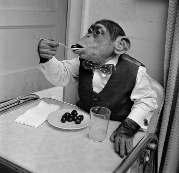 1958 Photograph - Cherry Chimp by Vecchio