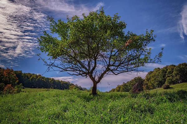 Photograph - Cherry Tree At Cloudland Farm by Rick Berk