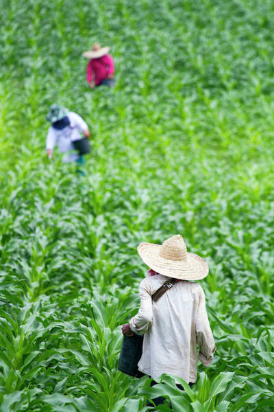 Real People Photograph - Chiang Rai_farmers by Jean-claude Soboul
