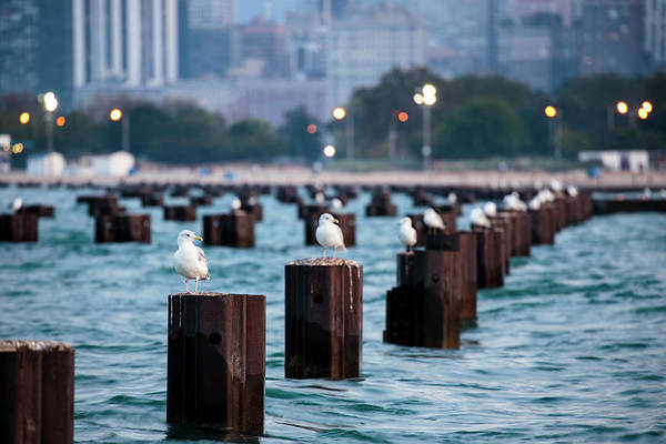 Wall Art - Photograph - Chicago, Illinois, Usa, Seagulls Sit by Brent Bergherm