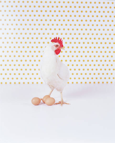 Wall Art - Photograph - Chicken By Three Eggs Against Spotted by Digital Vision