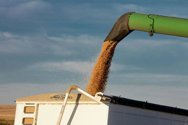Wall Art - Photograph - Chickpeas Auger by Todd Klassy
