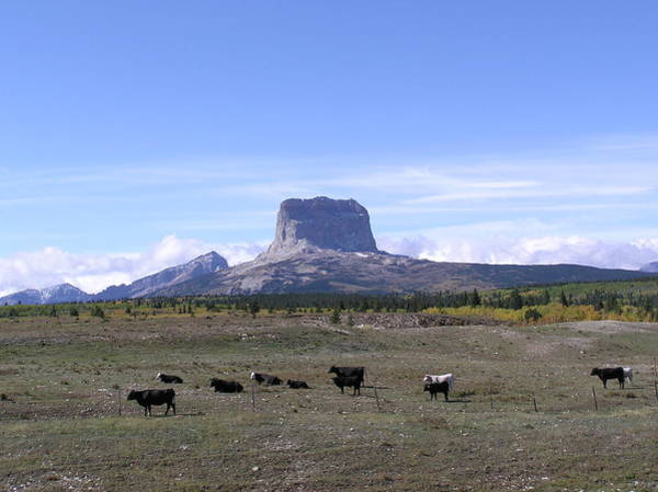 Cow Photograph - Chief Mountain In Glacier National Park by Donna62