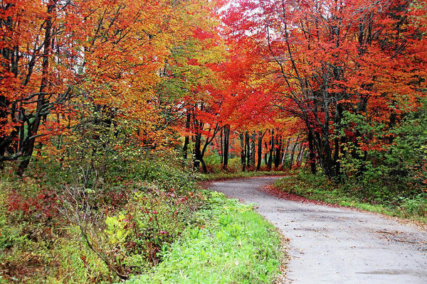 Wall Art - Photograph - Chikanishing Road In Fall by Debbie Oppermann