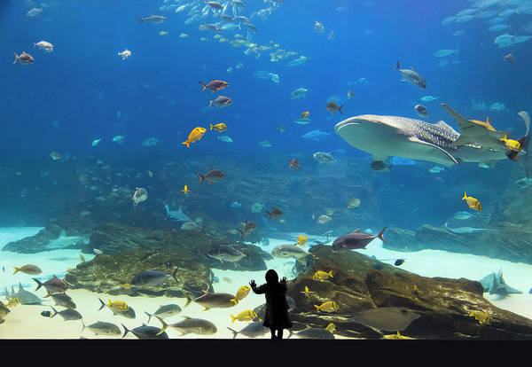 Georgia Aquarium Wall Art - Photograph - Child Watching Whale Shark And Saw Fish by Dejan Patic