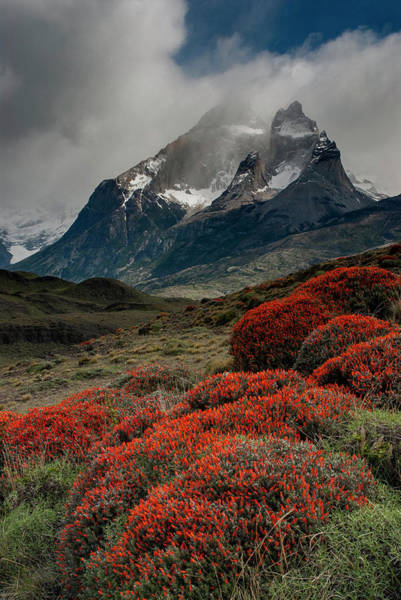 Wall Art - Photograph - Chile, Patagonia, Torres Del Paine by Howie Garber