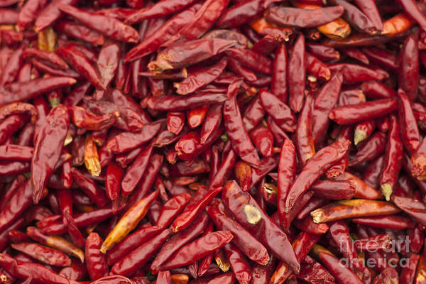 Wall Art - Photograph - Chili Pepper Dry by Quan Zheng