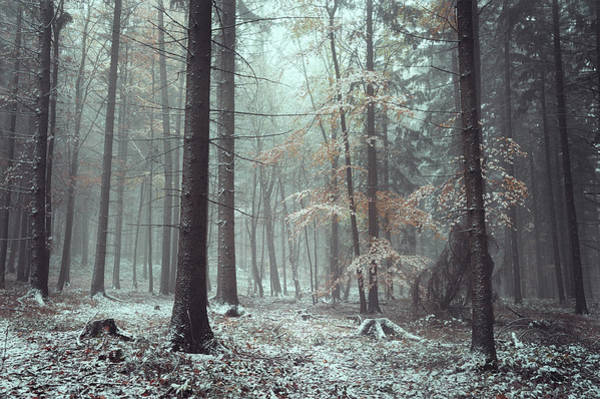 Photograph - Chill In Wintry Woods by Jenny Rainbow