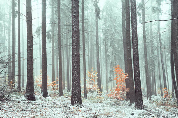 Photograph - Chilly Wintry Woods by Jenny Rainbow