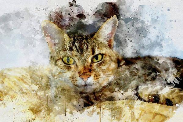 Lanzarote Digital Art - The Staring Cat by Frank Etchells