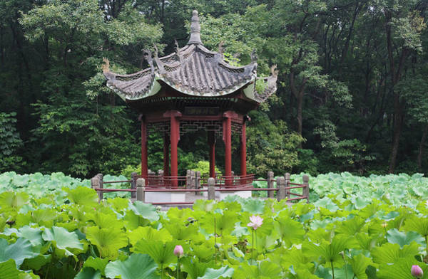 Wall Art - Photograph - China, Pavilion And Lotus Pond by Keren Su