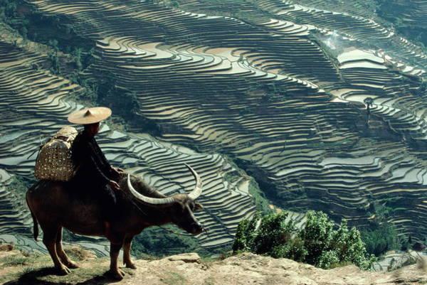 Wizard Hat Wall Art - Photograph - China, Yunnan, Hani Sorcerer On Buffalo by Yann Layma