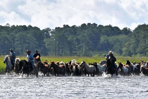 Photograph - Chincoteague Cowboys by Kim Bemis
