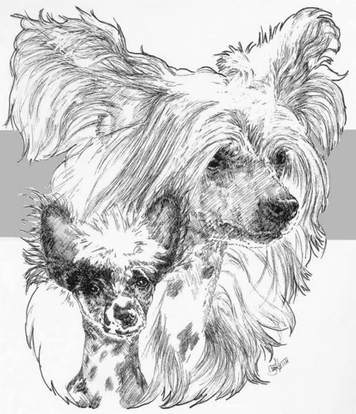 Drawing - Chinese Crested And Pup by Barbara Keith