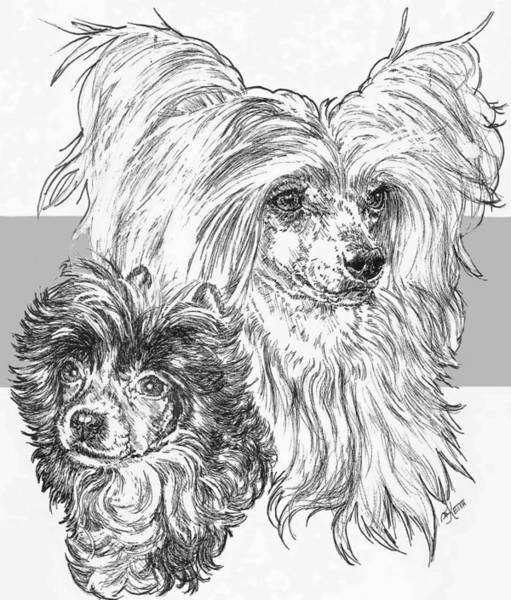 Drawing - Chinese Crested Powderpuff And Pup by Barbara Keith